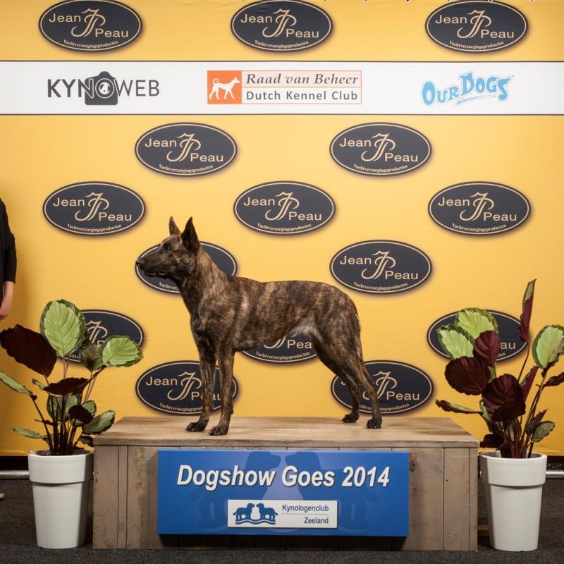1031_Dogshow GOES_2014_Kynoweb- Ernst von Scheven_April 19, 2014_10_22_00